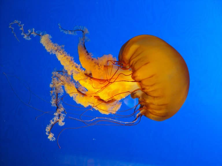 Jellyfish Have Superpowers