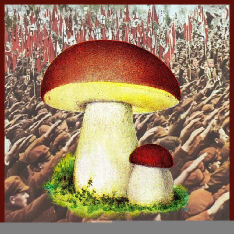Scientists Discover that Magic Mushrooms might Fight Fascism