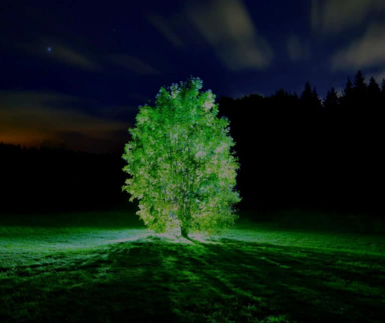 Scientists Use Nanoparticles to Create Amazing Glowing Plants