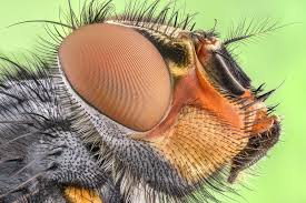 These Hairy Flies Can Actually 'Breathe' Underwater
