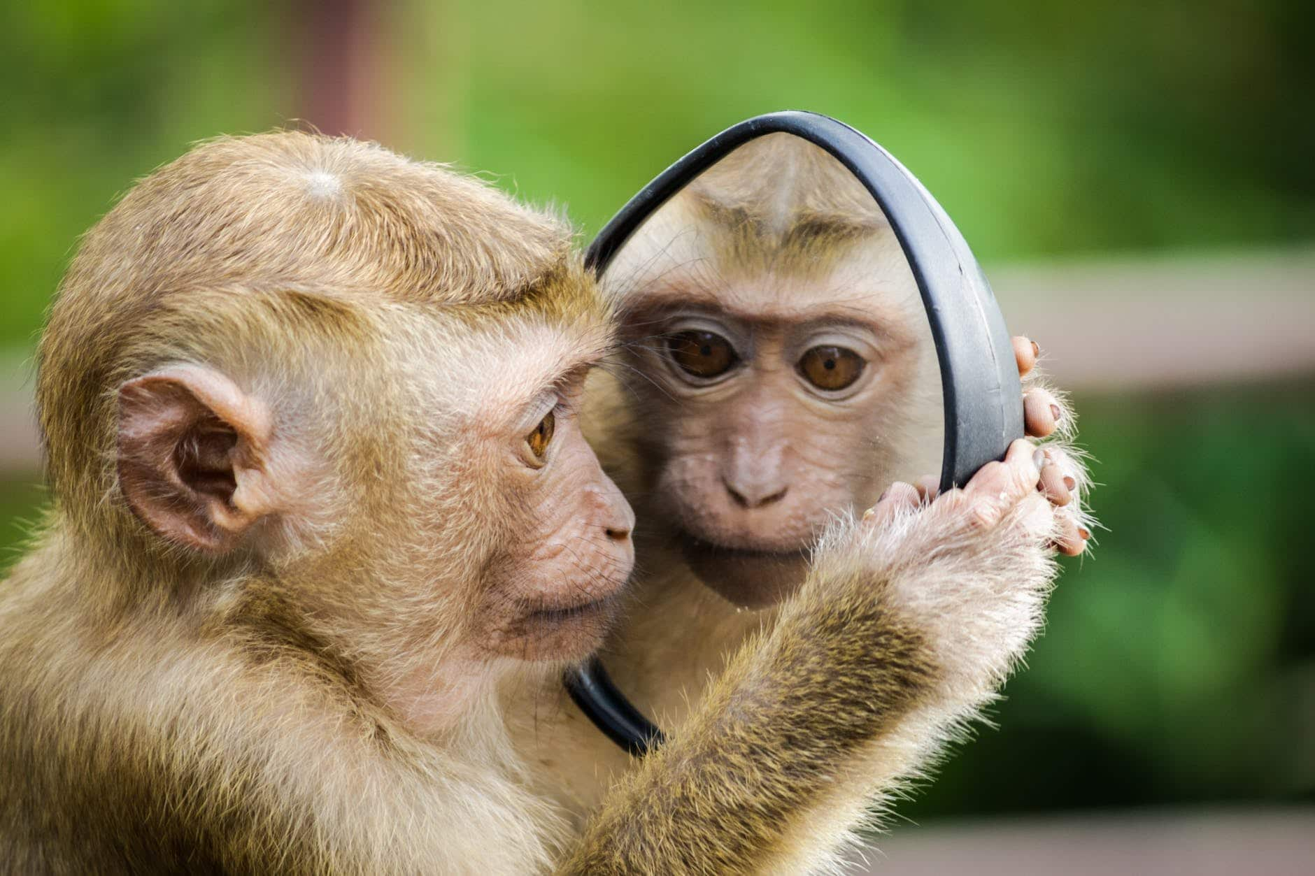 Why Didn't Every Primate Evolve into Human Beings?