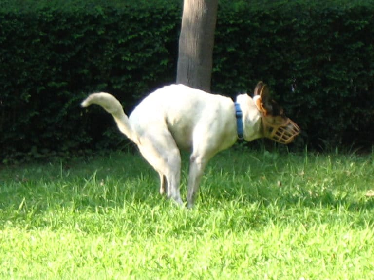 Why Dogs Eat Poop and Other Crazy Pet Behavior