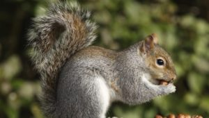 how squirrels organize their nuts for the winter