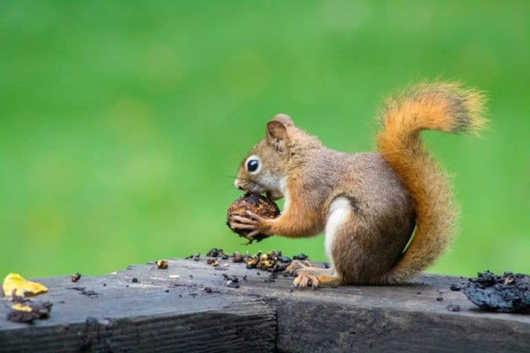 squirrels organizing nuts for the winter