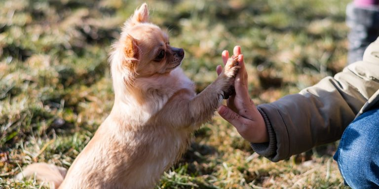 5 Incredible Ways Dogs Have Been Valued and Even Worshiped