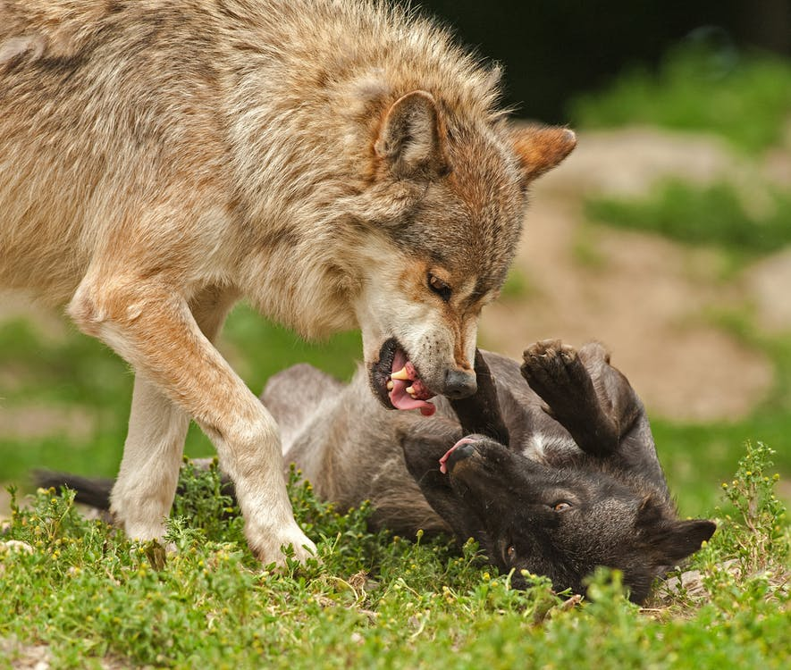 Do Animals Really Murder One Another?