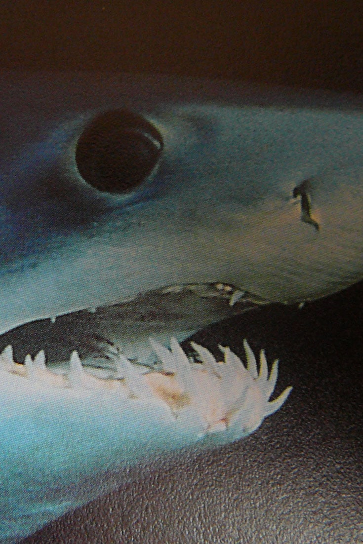 The Fastest Shark on the Planet is in Trouble