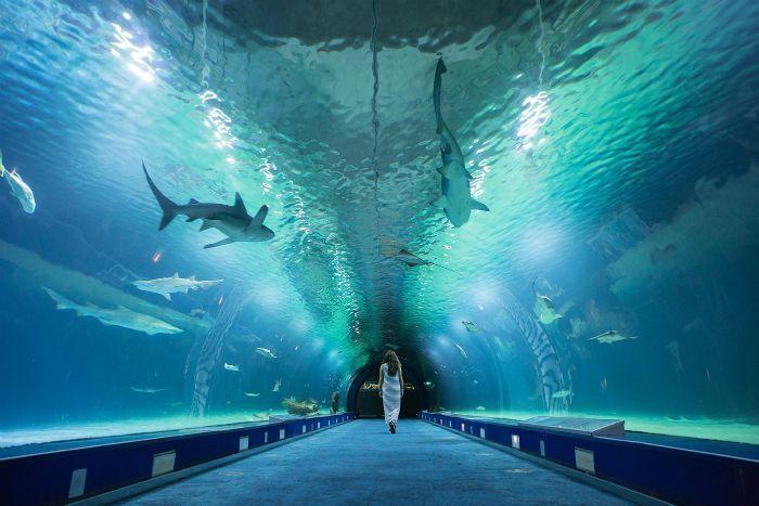L'Oceanographic Aquarium Spain