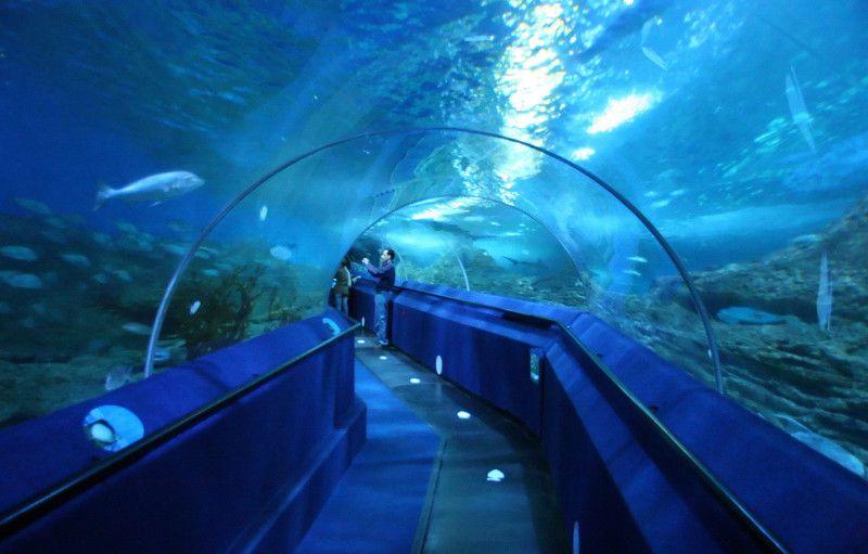 The Aquarium of Western Australia Perth