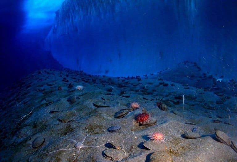 Microbes Sleeping 100 million years on the ocean floor Have Awakened