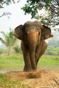 sustainable tourism wild life