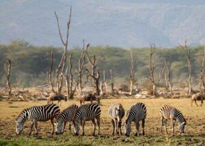 wildlife ecotourism